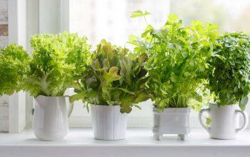 Small-Indoor-Garden-home